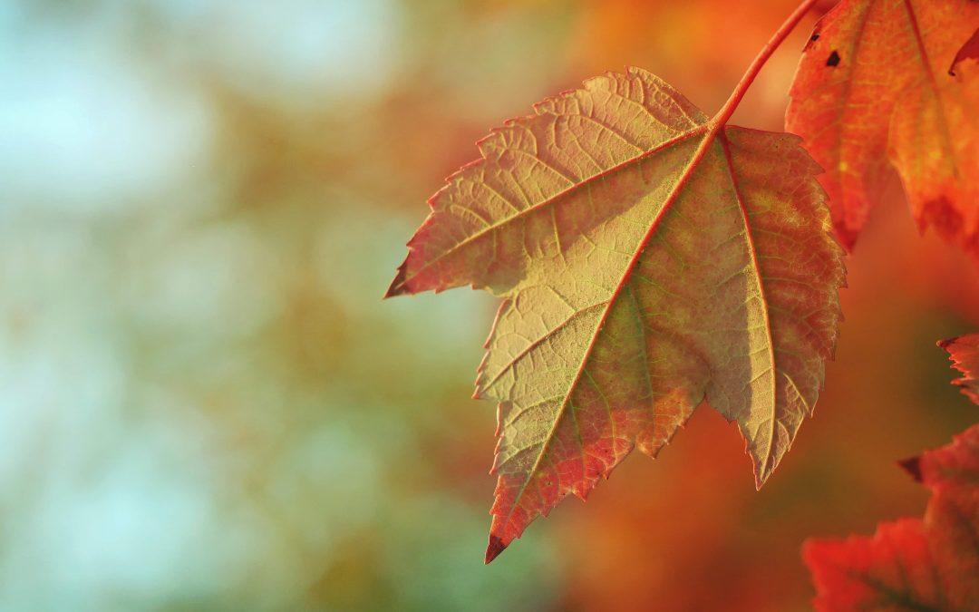 Verwarmende tips voor de herfst